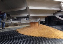corn-pouring-from-truck-216x150