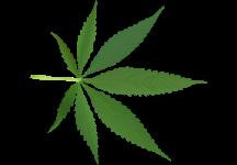 weedleaf216x150